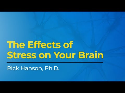 The Effects of Stress on Your Brain with Rick Hanson, Ph.D.
